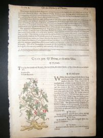 Gerards Herbal 1633 Hand Col Botanical Print. White Bryony